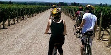 Bike Tour in Mendoza