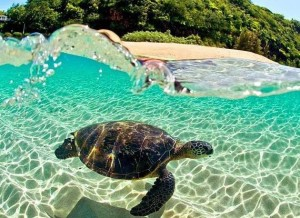 Sea Turtle, Oahu, Hawaii. Photography by Clark Little